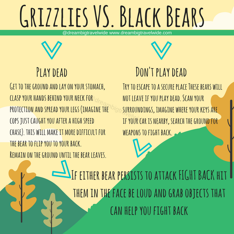 Copy of Grizzlies vs. Blackbears